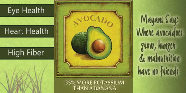 Avocados – The Perfect Food or Funky Fruit?